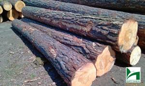 drewno-budowlane