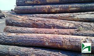 drewno-budowlane-optymex