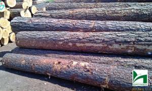 drewno-budowlane-tartak-bydgoszcz