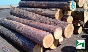 drewno-budowlane-tartak-wudzyn