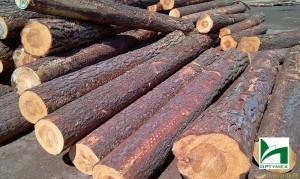 drewno-optymex